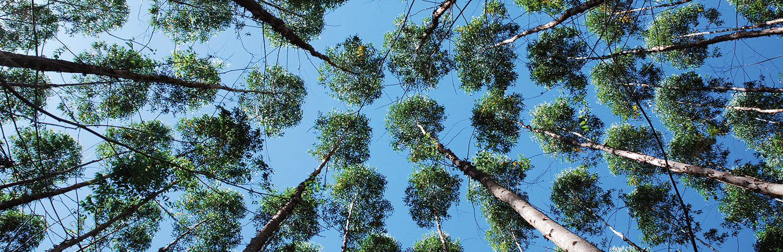 TOP_IWC_eucalyptus